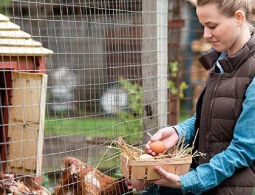 An Invitation for Backyard Poultry Owners from the Centers for Disease Control and Prevention