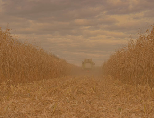 Corn harvest heralds large farm equipment on roads