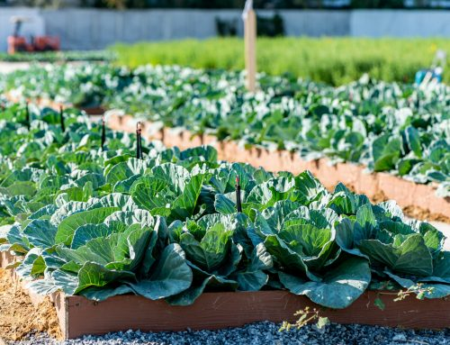 Governor Northam Announces New Grant Program Supporting Local Food and Farming Infrastructure