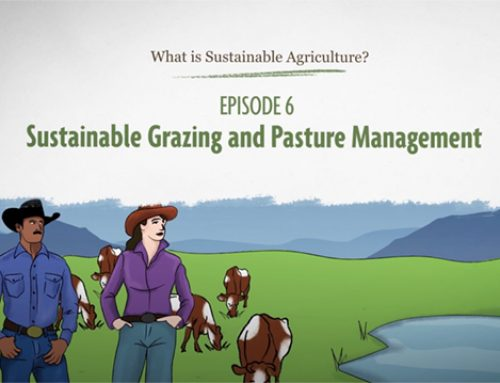 """New """"Sustainable Grazing and Pasture Management"""" Video from SARE"""